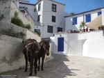 Donkey on the island of Hydra, Greece