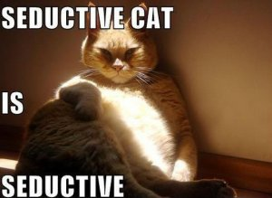 Oh Facebook, you seduce us with your cat photos! Image: dailydawdle.com